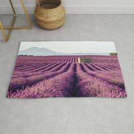 Lavender Fields, France Rug