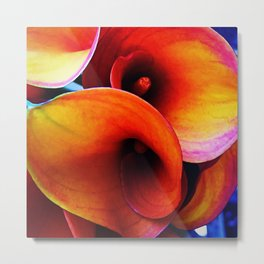 Orange Calla Lillies Metal Print