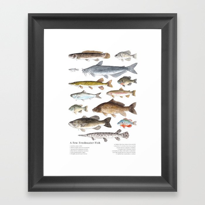 A Few Freshwater Fish Gerahmter Kunstdruck