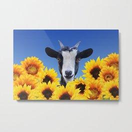 Goat in Sunflower field Metal Print