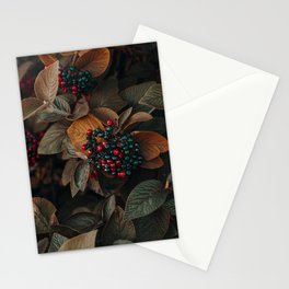 Fruit and Nature Stationery Cards