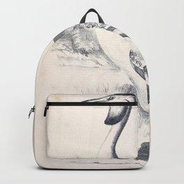 084 Australian Tippet Grebe podiceps australis Backpack