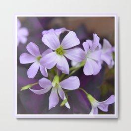 Lavender Petals No.2 | Nadia Bonello Metal Print