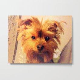 Yorkie Dog Portrait | Nadia Bonello Metal Print