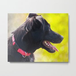 Dogs laughed Metal Print