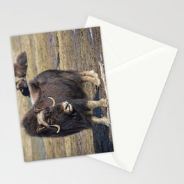 Arctic Muskox Stationery Cards