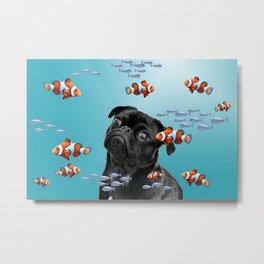 Pug Mops Dog between Clownfishes Metal Print