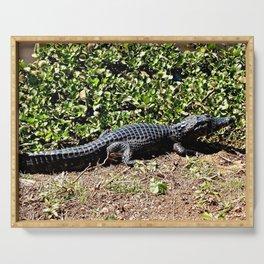 Black Brazilian Caiman Alligator Swamp Wildlife, Pantanal, Brazil Serving Tray
