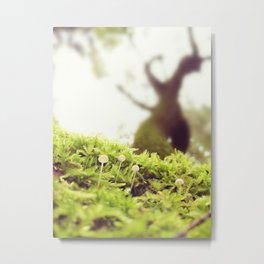 Little white mushrooms in the forest on a moss covered tree trunk in sunlight nature photography Metal Print