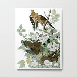 Morning Dove by J.J. Audubon Metal Print