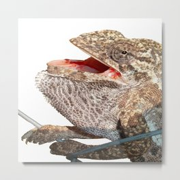 A Chameleon With Open Mouth Isolated Metal Print
