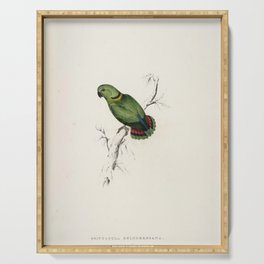 Agapornis swindernianus Black-collared Loverbird by Edward Lear Serving Tray