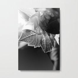 flower close up - black/white - ninteen Metal Print