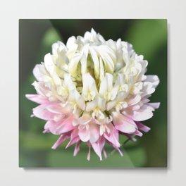 One Clover Flower | Nadia Bonello Metal Print