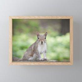 Baby Gray Squirrel Portrait Framed Mini Art Print