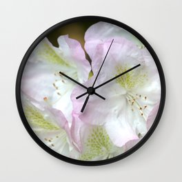 Gentle blush rhododendron Wall Clock