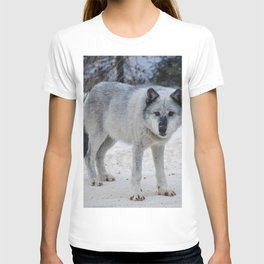Lone wolf of the Canadian Rocky Mountains T-shirt
