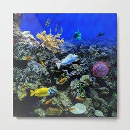 Fishtank Metal Print