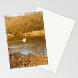Swan in a golden pond Stationery Cards