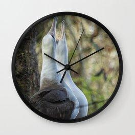 Laysan Albatrosses in Love Wall Clock
