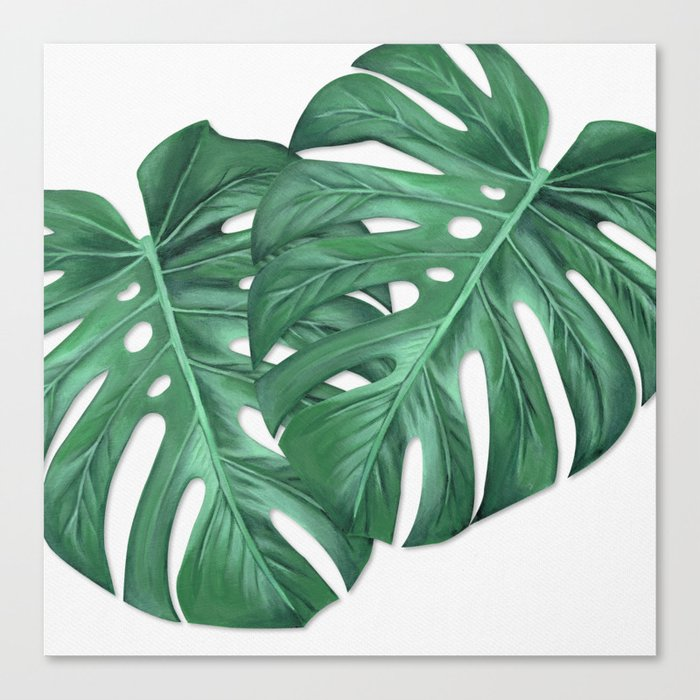 Monstera Tropical Leaf Painting Canvas Print By Anne Marieart Society6 Watercolor painting of lotus flower. monstera tropical leaf painting canvas print by anne marieart