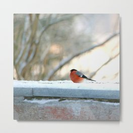 Red Plumage - Bullfinch male - #decor #society6 #buyart Metal Print