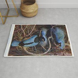 The blue bird of paradise illustrated by Sir Henry Hamilton Johnston (1858-1927) Rug