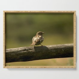 Single little bird on a fence, animal in the nature, spring birdie close up photography, nostalgia Serving Tray