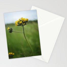 Summer Dandelion Stationery Cards