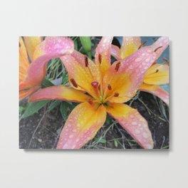 Lily after rain Metal Print