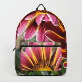 Burgundy Pink and Orange Gazania Backpack