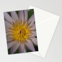 Water Lily - Nymphaea sp. (2) Stationery Cards