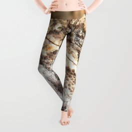 Chameleon Camouflaged In Earth Tones Close Up Photography Leggings