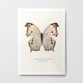 Protogoniomorpha Parhassus Metal Print