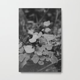 Dainty Moody Leaves from the Forest Floor in Black and White Photography Metal Print