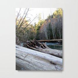 Fallen Trees Metal Print