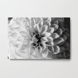 flower close up - black/white - six Metal Print