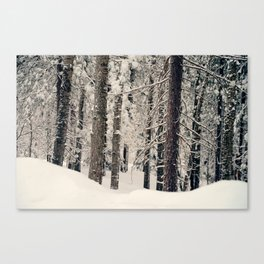 Winter Woods 1 Canvas Print