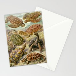 Ernst Haeckel Chelonia 1904 Poster Stationery Cards