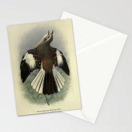 White-banded Mocking-Bird, mimus triurus14 Stationery Cards