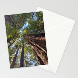 Muir Woods Tranquility  #2 Stationery Cards