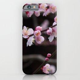Japanese pink plum blossom iPhone Case