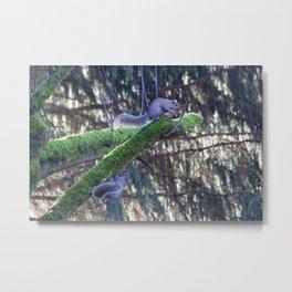 Branch Climbing  Metal Print