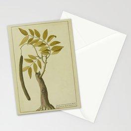 Cinnamon Print, CASSIA, Botanical Illustration, Plant Life Kitchen Art, Floral Home Decor Stationery Cards