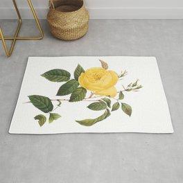 Botanical Print, Yellow Roses, Rosa Sulfurea Rug