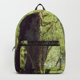 Trees in a Park Backpack