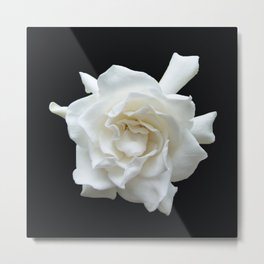 Gardenia on Black DPG150524 Metal Print