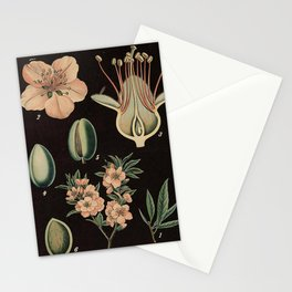 Botanical Almond Stationery Cards