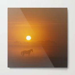 Horse in the morning sun Metal Print