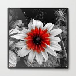 Red Stroke Gaillardia Flower | Nadia Bonello Metal Print